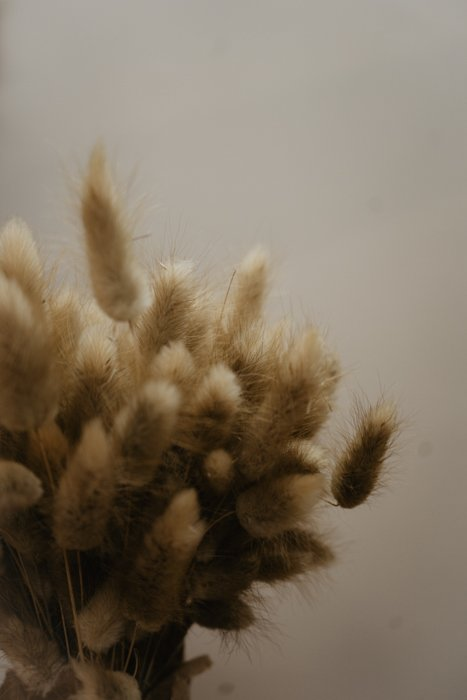 getrockneter Lagurus natur Alles Interior Boho Scandi Look anitimadeforyou Concept Store Langenfeld Trockenblumen, Trockenblumen Kränze, Workshops, Schmuck