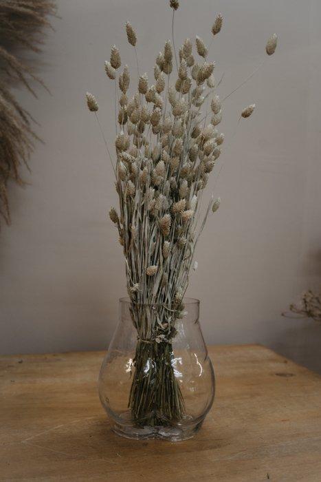 Phalaris gebleicht Alles Interior Boho Scandi Look anitimadeforyou Concept Store Langenfeld Trockenblumen, Trockenblumen Kränze, Workshops, Schmuck