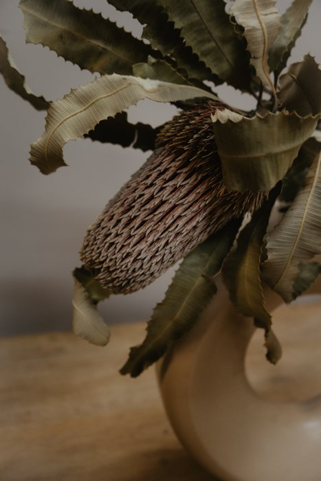 Banksia menziesii Alles Interior Boho Scandi Look anitimadeforyou Concept Store Langenfeld Trockenblumen, Trockenblumen Kränze, Workshops, Schmuck