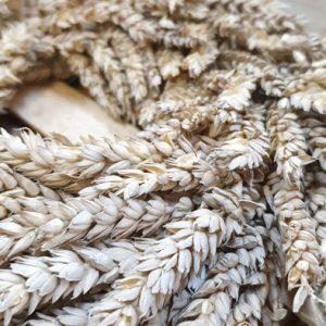 Getreidekranz aus Weizen Beige 30cm Trockenblumen Interior Boho Scandi Look anitimadeforyou Concept Store Langenfeld Trockenblumen, Trockenblumen Kränze, Workshops, Schmuck