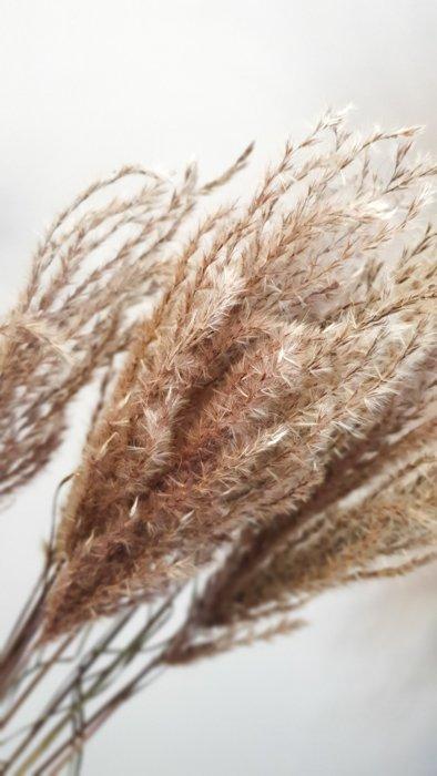Federgras Miscanthus getrocknet Alles Interior Boho Scandi Look anitimadeforyou Concept Store Langenfeld Trockenblumen, Trockenblumen Kränze, Workshops, Schmuck