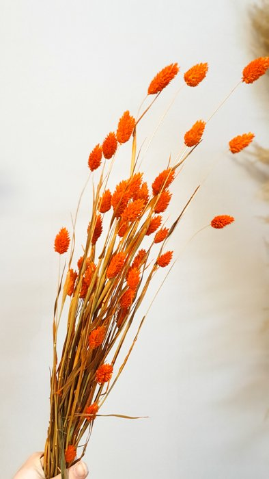 getrockneter Phalaris orange rot Mini Bund Alles Interior Boho Scandi Look anitimadeforyou Concept Store Langenfeld Trockenblumen, Trockenblumen Kränze, Workshops, Schmuck
