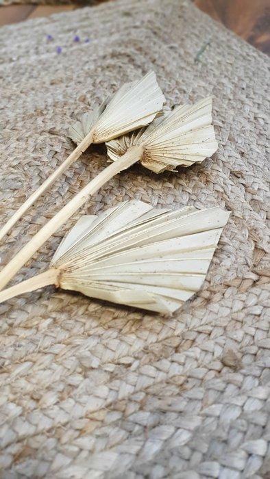 Mini Palmblatt getrocknet Alles Interior Boho Scandi Look anitimadeforyou Concept Store Langenfeld Trockenblumen, Trockenblumen Kränze, Workshops, Schmuck