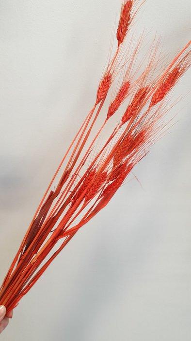 getrockneter Gersten Strauss rot Mini Bund Alles Interior Boho Scandi Look anitimadeforyou Concept Store Langenfeld Trockenblumen, Trockenblumen Kränze, Workshops, Schmuck