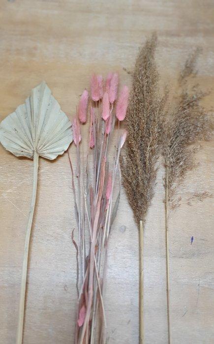 getrockneter Lagurus rosa Mini Bund Alles Interior Boho Scandi Look anitimadeforyou Concept Store Langenfeld Trockenblumen, Trockenblumen Kränze, Workshops, Schmuck