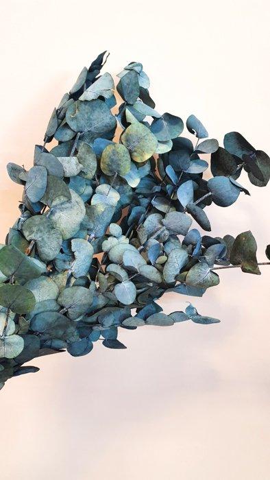 Getrockneter Eukalyptus Populus Bleu Alles Interior Boho Scandi Look anitimadeforyou Concept Store Langenfeld Trockenblumen, Trockenblumen Kränze, Workshops, Schmuck