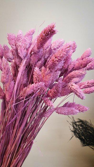 getrocknete Phalaris Lila Alles Interior Boho Scandi Look anitimadeforyou Concept Store Langenfeld Trockenblumen, Trockenblumen Kränze, Workshops, Schmuck