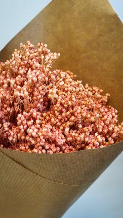getrockneter Broom Bloom Pink Alles Interior Boho Scandi Look anitimadeforyou Concept Store Langenfeld Trockenblumen, Trockenblumen Kränze, Workshops, Schmuck