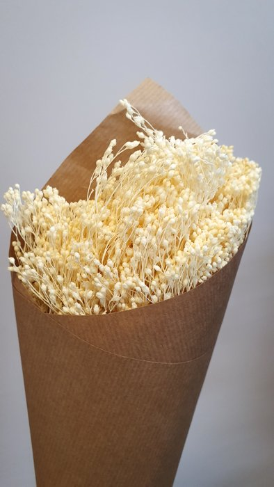 getrockneter Broom Bloom Weiß gebleicht Alles Interior Boho Scandi Look anitimadeforyou Concept Store Langenfeld Trockenblumen, Trockenblumen Kränze, Workshops, Schmuck
