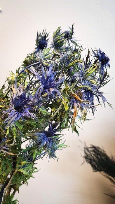 getrockneter blauer Distel Strauss Alles Interior Boho Scandi Look anitimadeforyou Concept Store Langenfeld Trockenblumen, Trockenblumen Kränze, Workshops, Schmuck