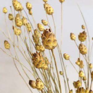 getrocknete Mini Artischocken Strauss Trockenblumen Interior Boho Scandi Look anitimadeforyou Concept Store Langenfeld Trockenblumen, Trockenblumen Kränze, Workshops, Schmuck
