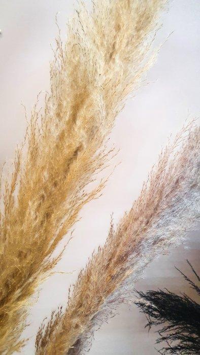 Getrocknetes Pampasgras grau beige – pro Stück Alles Interior Boho Scandi Look anitimadeforyou Concept Store Langenfeld Trockenblumen, Trockenblumen Kränze, Workshops, Schmuck