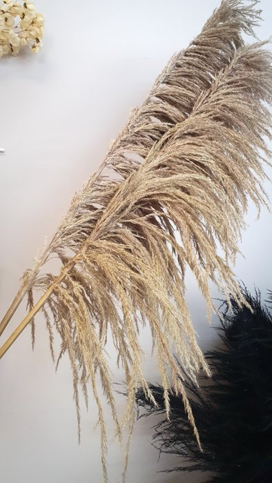 pampasgras beige