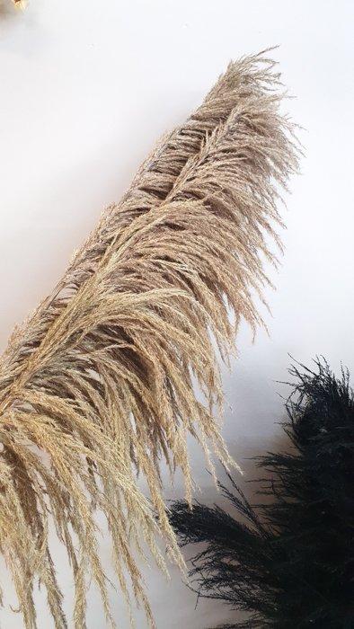 Getrockneter Pampasgras Wedel – extra fluffy Alles Interior Boho Scandi Look anitimadeforyou Concept Store Langenfeld Trockenblumen, Trockenblumen Kränze, Workshops, Schmuck