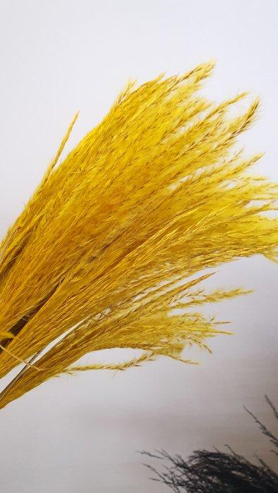 pampasgras gelb
