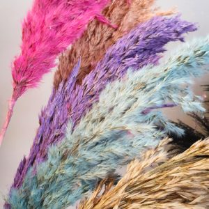 Pampasgras Fluffy verschiedene Farben Alles Interior Boho Scandi Look anitimadeforyou Concept Store Langenfeld Trockenblumen, Trockenblumen Kränze, Workshops, Schmuck