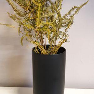 getrockneter Farn Natur Grün in Vase