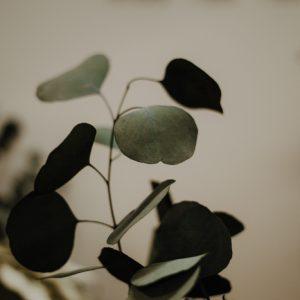 Getrockneter Eukalyptus Populus Trockenblumen Interior Boho Scandi Look anitimadeforyou Concept Store Langenfeld Trockenblumen, Trockenblumen Kränze, Workshops, Schmuck