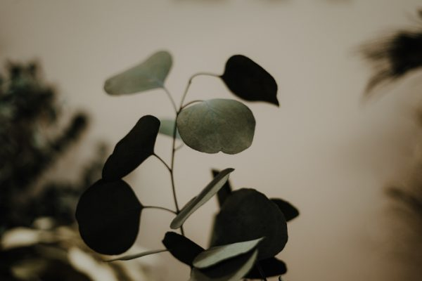 Getrockneter Eukalyptus Populus Alles Interior Boho Scandi Look anitimadeforyou Concept Store Langenfeld Trockenblumen, Trockenblumen Kränze, Workshops, Schmuck