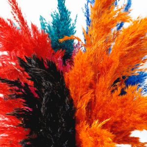 Pampasgras Fluffy verschiedene Farben Herbst Kollektion Alles Interior Boho Scandi Look anitimadeforyou Concept Store Langenfeld Trockenblumen, Trockenblumen Kränze, Workshops, Schmuck