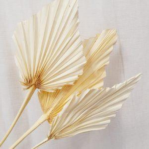 Mini Palmblatt getrocknet Weiß Alles Interior Boho Scandi Look anitimadeforyou Concept Store Langenfeld Trockenblumen, Trockenblumen Kränze, Workshops, Schmuck